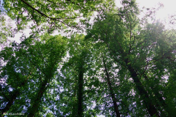 木々と日光