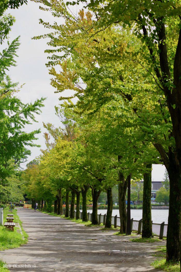 公園内の木々